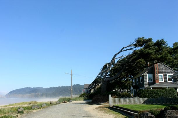 Cannon Beach. The trees made me giggle.