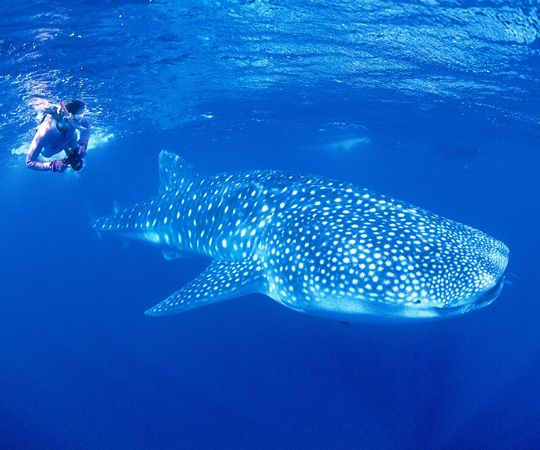 10 places in australia i wish i saw but didn 39 t kirst over the world - Ningaloo reef dive ...