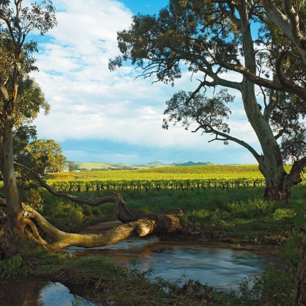 Jacobs Creek, Barossa Valley